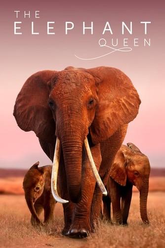 The Elephant Queen 2019 1080p WEB-DL DD5 1 H264-TARS