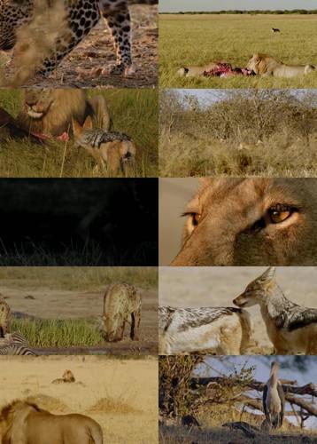 Africas Deadliest S04E03 Steal or Die WEBRip x264 CAFFEiNE